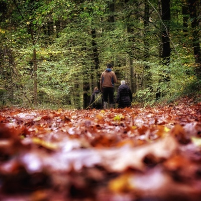 Sacchetti's - Eden in de natuur